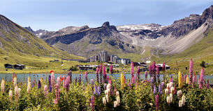 Jezioro Tignes i kwiaty w Francja Fotografia Stock