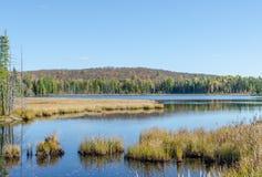 Jezioro w Algonquin parku Zdjęcia Royalty Free