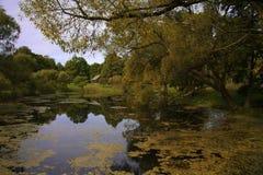 Jezioro w błocie Obrazy Royalty Free