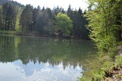 Jezioro w cudownej naturze Fotografia Royalty Free
