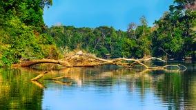 Jezioro w dżungli zdjęcia stock
