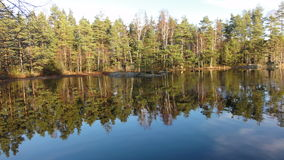 Jezioro w forrest Zdjęcie Stock