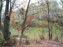 Jezioro w jesieni Obrazy Stock