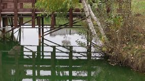 Jezioro w jesieni Gałąź brzoza z kolorów żółtych liśćmi i mostem w tle zdjęcie wideo