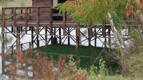 Jezioro w jesieni Gałąź brzoza z kolorów żółtych liśćmi i mostem w tle zbiory wideo