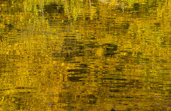 Jezioro w jesieni z odbiciem jesień liście Fotografia Stock