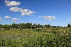 Jezioro w lecie Zdjęcie Stock