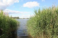 Jezioro w lecie Fotografia Stock