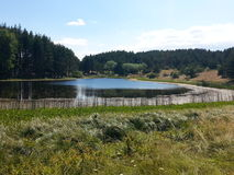 Jezioro w lesie Fotografia Stock