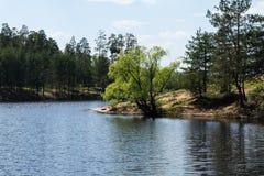 Jezioro w lesie i drewno w Kurowski Obraz Royalty Free