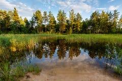 Jezioro w Lesie i Drzew Odbiciu Zdjęcie Stock