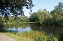 Jezioro w lesie z odbiciami w wodzie obraz stock