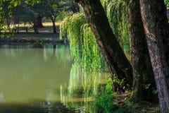Jezioro w miasto parku Fotografia Royalty Free
