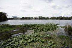 Jezioro w Orlando z Lilly ochraniaczami zdjęcia royalty free