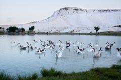 Jezioro w Pamukkale, Turcja Zdjęcie Stock