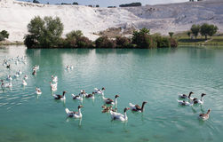 Jezioro w Pamukkale, Turcja Obraz Stock