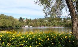 Jezioro w parku Fotografia Stock