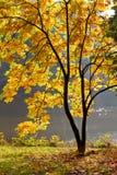 Jezioro w parku w jesień. Fotografia Royalty Free