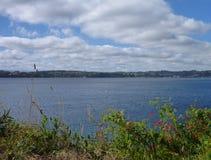 Jezioro w puerto varas kwitnienia vith kwiatach Zdjęcia Stock