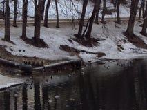 Jezioro w ranku z kaczkami zdjęcia stock