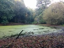 Jezioro w środku Forrest Obraz Stock