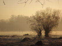 Jezioro w zimie Obrazy Stock