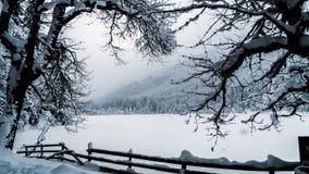 Jezioro w zimie Zdjęcia Royalty Free
