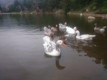Jezioro widoki Obraz Stock
