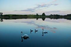 Jezioro z łabędź płoch lasem i most przy spokojnym eavening letnim dniem zdjęcia royalty free