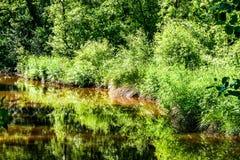 Jezioro z drzewami i krzakami obraz royalty free