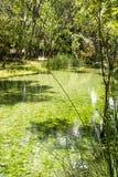 Jezioro z jasny wodą bardzo Fotografia Royalty Free