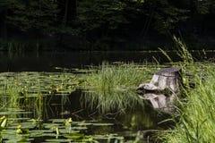 Jezioro z lelujami obrazy royalty free