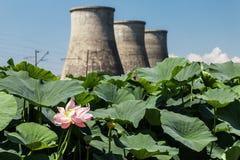 Jezioro z lotuses Zdjęcie Stock