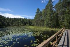 Jezioro z nadwodnymi roślinami Obrazy Royalty Free