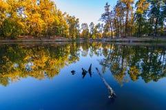Jezioro z odbijać drzewa obraz royalty free