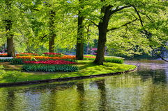 Jezioro z pięknymi białymi łabędź w Keukenhof parku, Lisse, Holandia fotografia royalty free