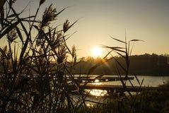 Jezioro z suchymi trzcinami przy zmierzchem Fotografia Stock