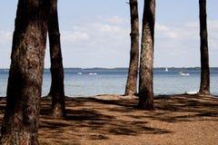 Jezioro za niektóre drzewami z pedałowymi łodziami Zdjęcie Royalty Free
