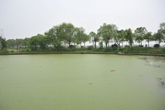 Jezioro zanieczyszczający eutrophication zdjęcia royalty free