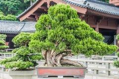 Ji Lin Nunnery Kowloon Hong Kong del árbol de los bonsais Imagenes de archivo