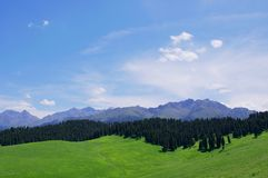 Jiangbulake grasslands. Xinjiang qitai jiangbulake grasslands green Royalty Free Stock Photography