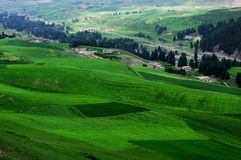 Jiangbulake grasslands. Green cornfield xinjiang Stock Image