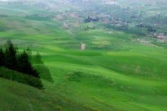 Jiangbulake grasslands. Green cornfield xinjiang Royalty Free Stock Image