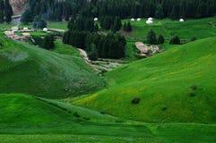 Jiangbulake grasslands. Green cornfield xinjiang Royalty Free Stock Images