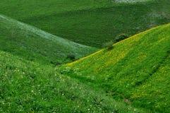 Jiangbulake grasslands. Green cornfield xinjiang Stock Photography