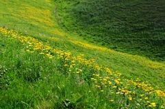 Jiangbulake grasslands Royalty Free Stock Image