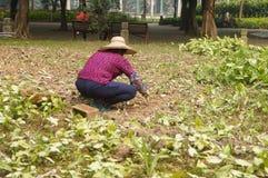 Jiangmen, China: Frauen räumen Unkräuter im Ackerland auf Lizenzfreie Stockfotos