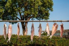 Jiangnan specialty --- dried fish Royalty Free Stock Photos