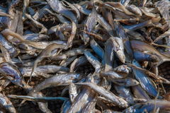 Jiangnan specialty --- dried fish Stock Images