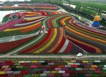 Jiangsu yancheng: de luchtfotografie van 30 miljoen tulpen in Nederland bedwelmt Royalty-vrije Stock Fotografie